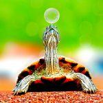 Quelles différences y a-t-il entre les tortues de mer et les tortues terrestres ?