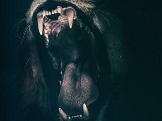 lion rugissant - dire des gros mots